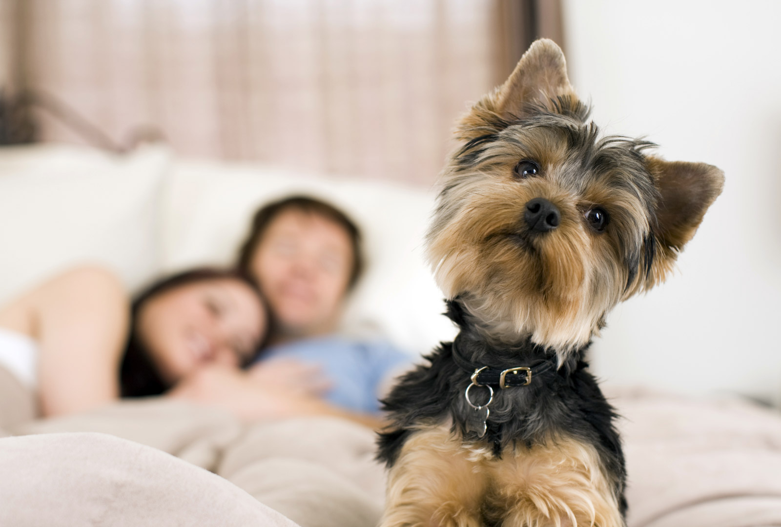 protect your pet with your homeowners insurance the bramlett agency